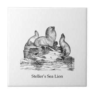 Steller Sea Lion Tile