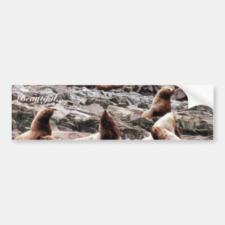 Steller Sea Lions at Haulout Bumper Sticker