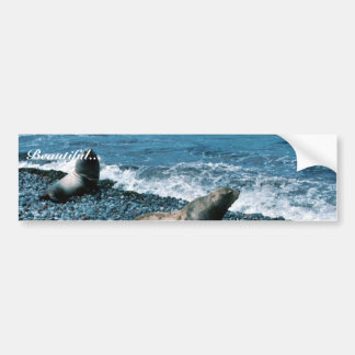 Steller Sea Lions Bumper Sticker