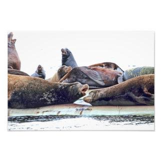 Steller Sea Lions Art Photo