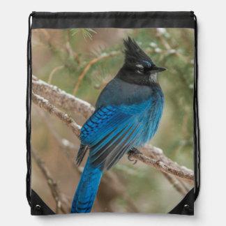 Steller's jay bird in tree drawstring bag