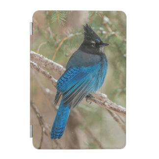 Steller's jay bird in tree iPad mini cover