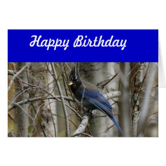 Steller's Jay Birthday Card
