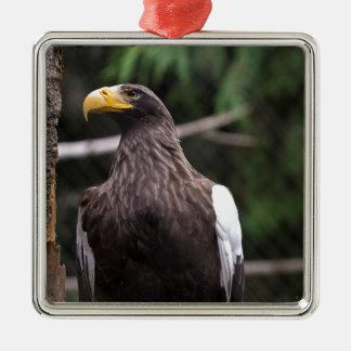 Steller's Sea Eagle Christmas Ornament