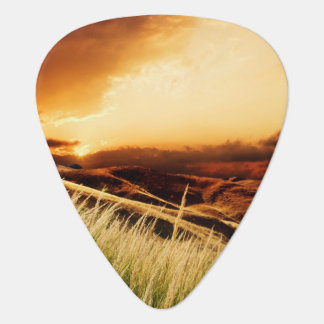 stems of rush at the sunset plectrum
