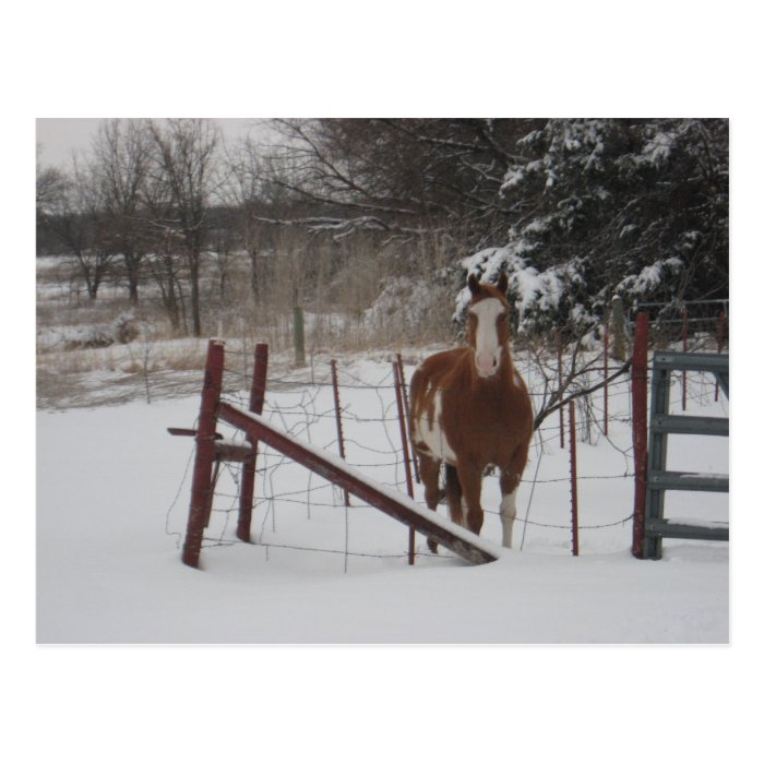 Stepper In The Snow Postcard