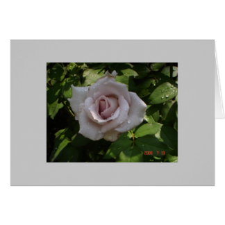 sterling silver rose greeting card
