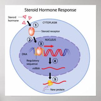 Corticosteroid hormone