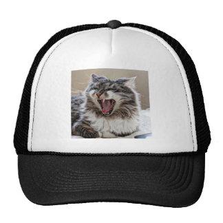 stewart yawn_fused.jpg trucker hat