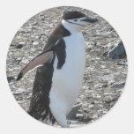 Sticker: Chinstrap Penguin