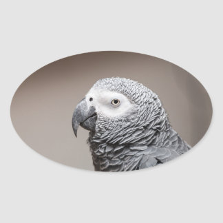 Sticker Congo African Grey Gray Parrot