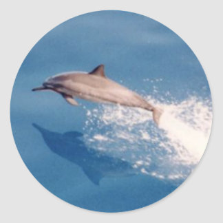 Sticker-Dolphin Jumping Round Sticker