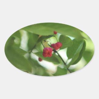 Sticker - Euonymous Berries