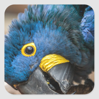Sticker featuring cute Hyacinth Macaw parrot