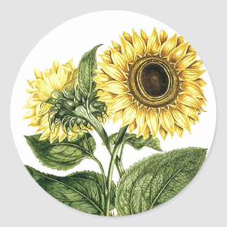 Sticker Heirloom Sunflower Botanical Floral Flower