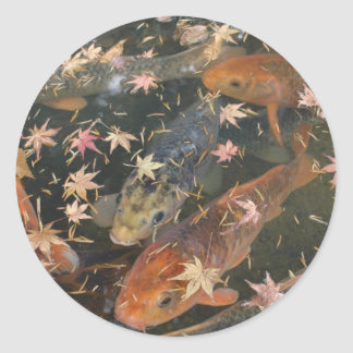 Sticker: Koi with autumn leaves