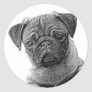 Sticker pug Barney