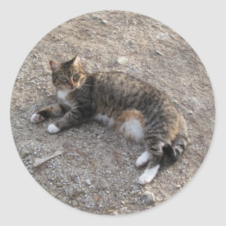 Sticker: Tabby Cat Resting Round Sticker