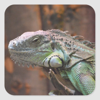 Sticker with colourful Iguana lizard