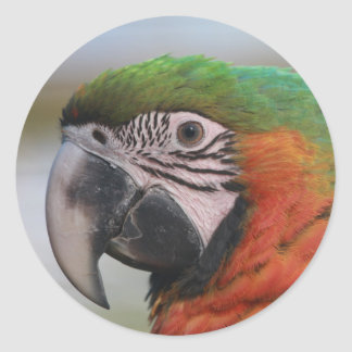 Sticker with Harlequin Macaw Parrot