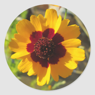 Stickers - Blanket Flower