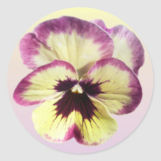 Stickers - Burgundy Blotch Pansy