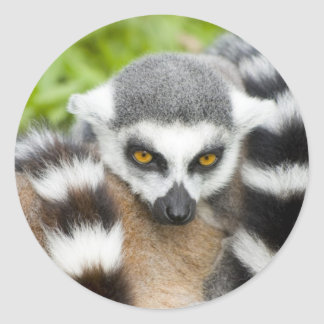 Stickers - Cute Lemur Stripey Tail