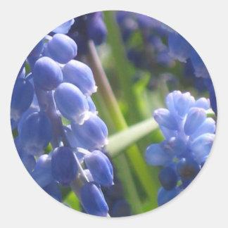 Stickers - Grape Hyacinth