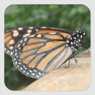 Stickers - Monarch Butterfly