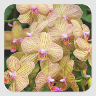 Stickers - Moth Orchid
