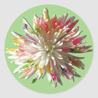 Stickers - Painted White Spider Mum