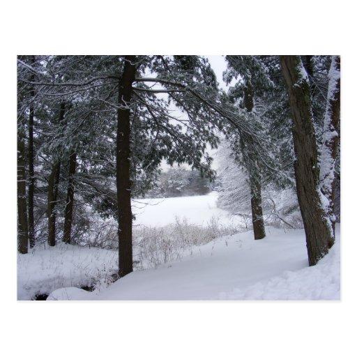 Sticky Snow 132 ~ postcard