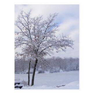 Sticky Snow 24 postcard