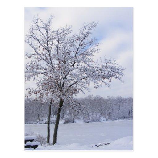Sticky Snow 24 ~ postcard