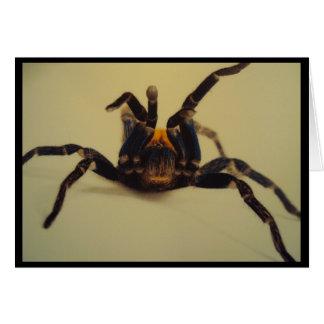 Stiking a Pose Tarantula Card