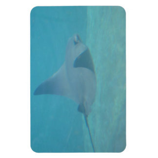 Sting Ray Flexible Magnet
