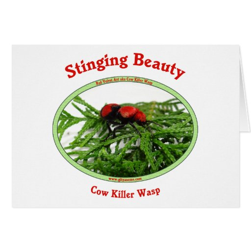 Stinging Beauty Cow Killer Wasp Greeting Cards