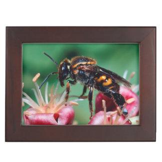 Stingless Bee (Meliponini) Collecting Nectar Keepsake Box