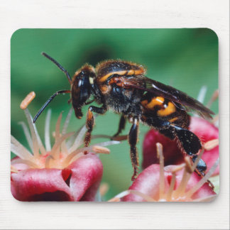 Stingless Bee (Meliponini) Collecting Nectar Mouse Pad
