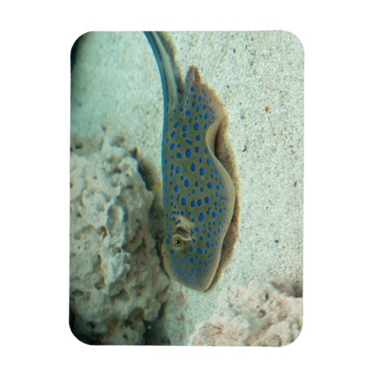 Stingray Blue Rectangular Photo Magnet