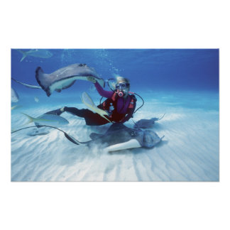 Stingray City, Grand Cayman, Cayman Islands, Poster
