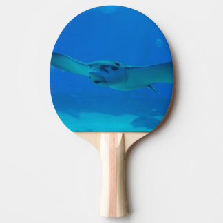 Stingray Swimming Under Water Ping Pong Paddle