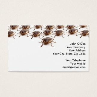 Stink or Shield bug for pest exterminator