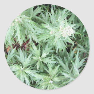 stink weed classic round sticker