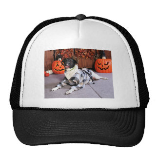 Stinky - Mixed Breed - Farber Hat
