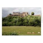 stirling castle sheep