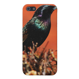 Stoic Bird Cover For iPhone 5
