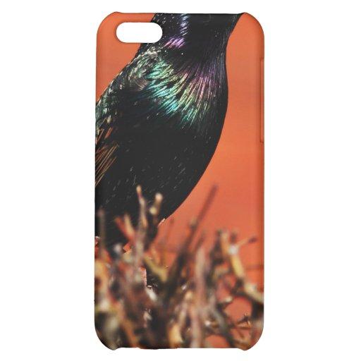 Stoic Bird iPhone 5C Cases