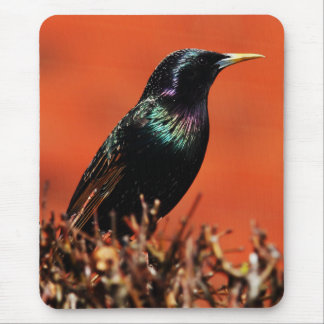 Stoic Bird Mouse Pad