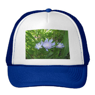Stokesia Stokes Aster Trucker Hat